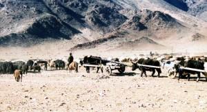 Umzug einer mongolischen Nomadenfamilie; tierische Ressourcen stellen und stellten unverzichtbare Bestandteile menschlicher Existenz dar, Foto: H. Böhm, Zentralmongolei.