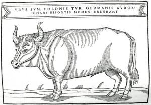 Manche, wohlbekannte Haustiere sind die einzigen Vertreter ihrer längst ausgestorbenen Wildformen – z.B. die bovinen Hausrinder als Form des Auerochsen (Ur).